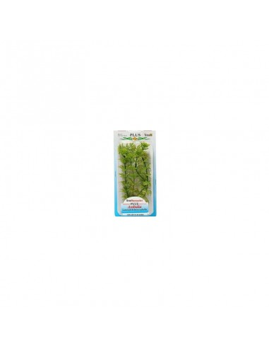 Tetra Plants 15cm Ambulia small