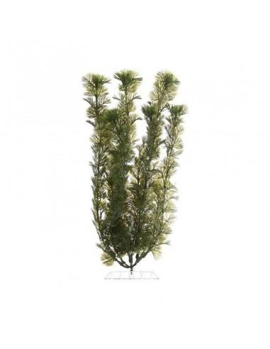 Tetra Plants  Cabomas 30cm