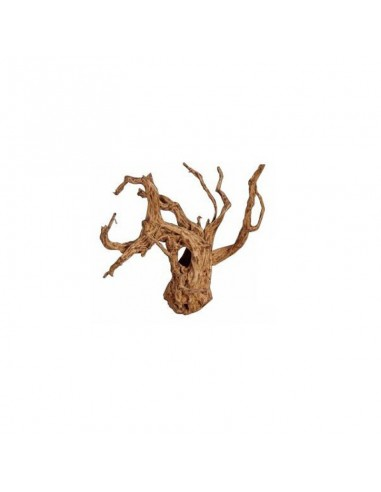 Sunken root / kg