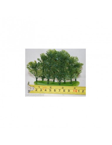 Tetra Plants 10cm Cabomba