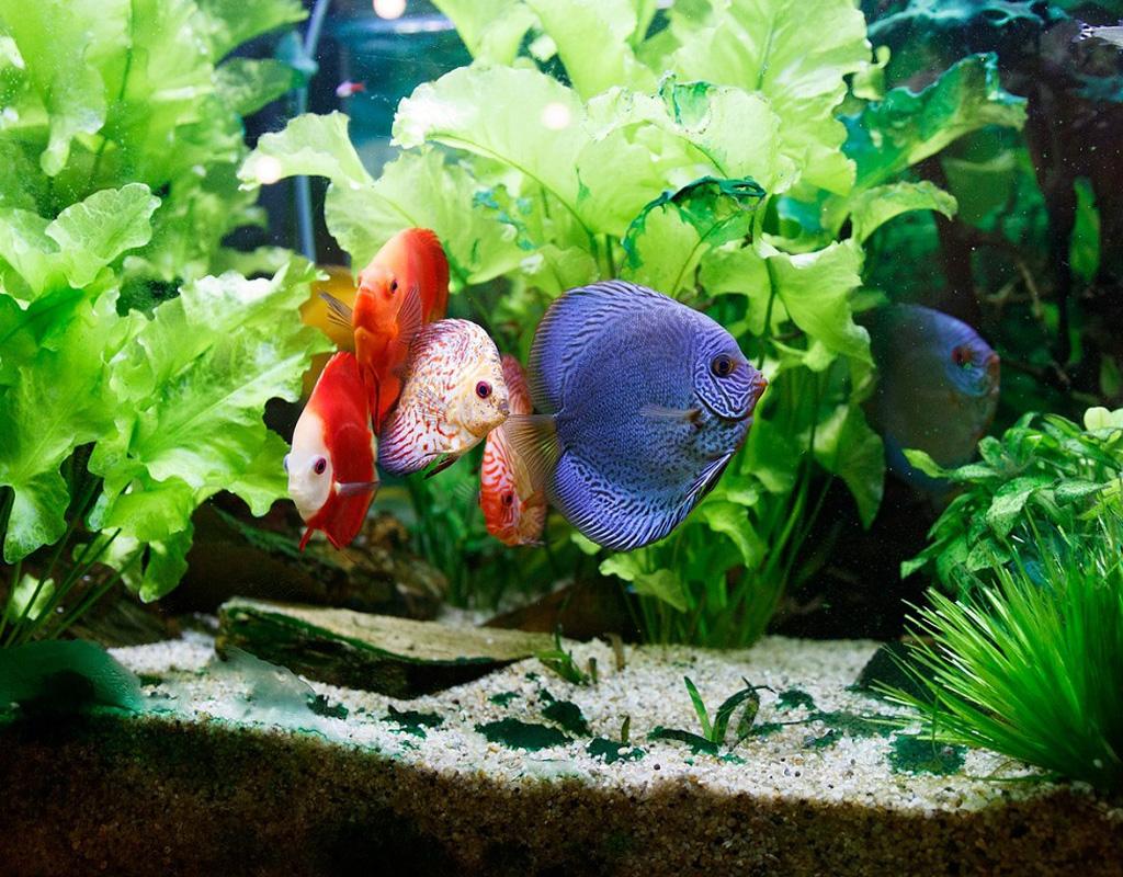Akvarijumske ribice